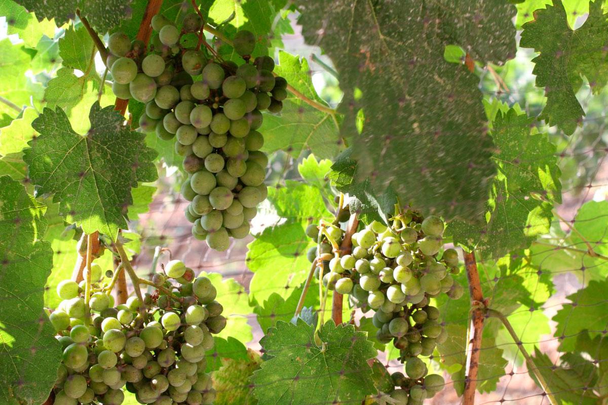 El esplendor del terruño del vino de Baja California